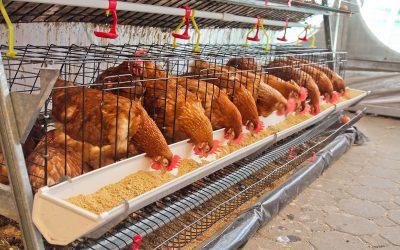 Wijziging regels stalemissies biologisch pluimvee en varkens